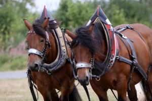 leasing pferde forstwirtschaft
