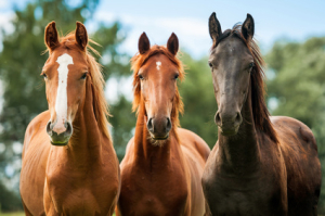 pferde-leasing